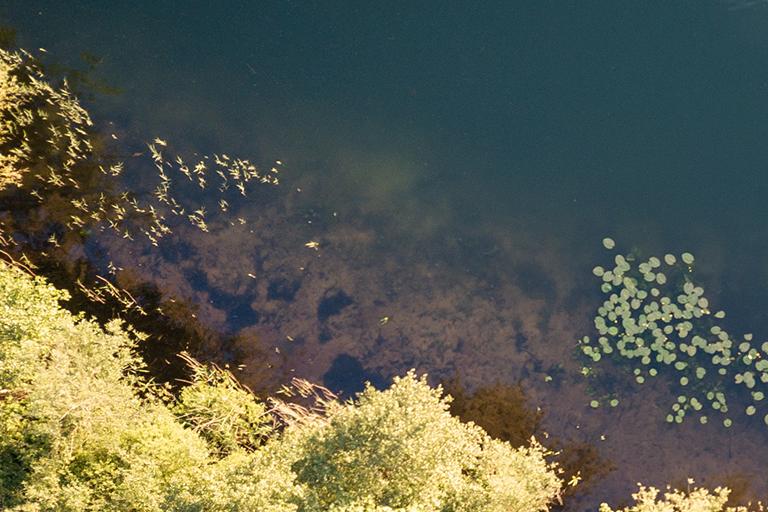 Een omschrijving van het water van CarpFarm Lake