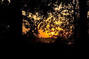 Foto CarpFarm Lake impressie | 015